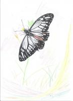 蝴蝶手繪圖