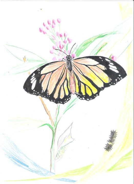 蝴蝶手绘图图片